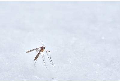 De 6 beste tips om buiten muggen te verjagen